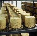 FARGEBILDE,VIK I SOGN,TINE MEIERIER VEST,OST,GAMMELOST,PRODUKSJON,GAMALOST,gammalostprod. i Vik detalj fersk ost til modning