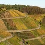 vineyard-233338_640