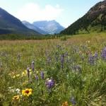 wildflowers-142900_1920