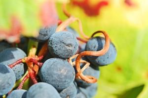 wine-209484_640