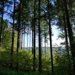 forest-487019_1280